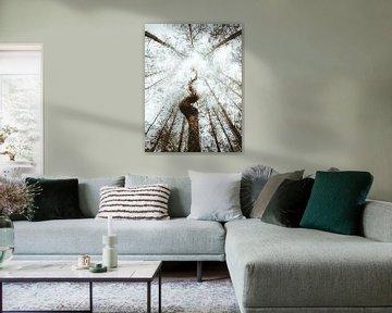 Der ungewöhnliche Baum von Jakub Wencek