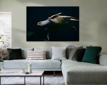Meeresschildkröte von Katrien Ertryckx