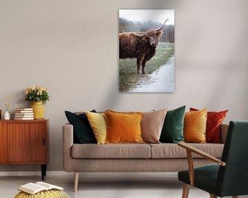Schotse Hooglander - Amsterdamse Bos van Photography by Cynthia Frankvoort