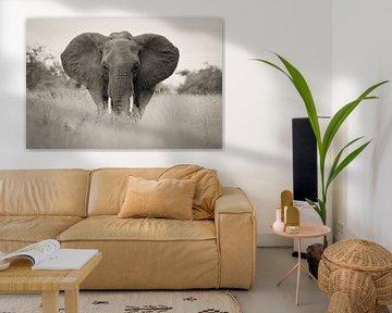 éléphant dans le parc kruger en afrique du sud