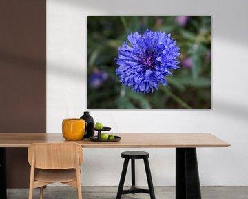 Blaue Kornblume von Lea-Marie Littwin