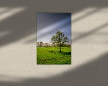 Boom in een veldje tijdens zonsondergang van Mickéle Godderis