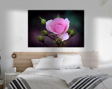 Rose von Rob Boon