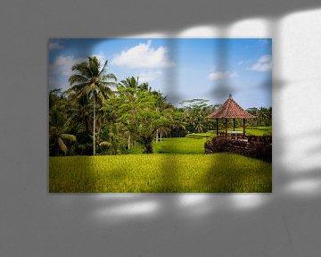 Rijstvelden op Bali  van Pieter Wolthoorn