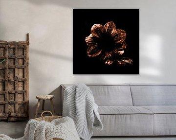 Goldene Dahlie auf schwarzem Hintergrund von Yana Spiridonova