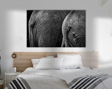 le derrière d'un éléphant en noir et blanc sur Ed Dorrestein