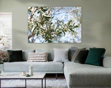 Olijf, olijven, olivetree, olijftakken van Liesbeth Govers voor omdewest.com