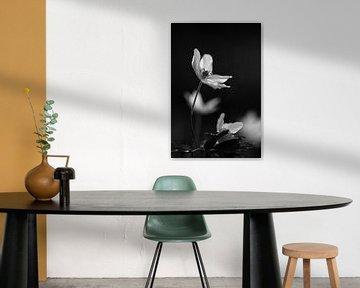Bosanemone schwarz-weiß von EFFEKTPHOTOGRAPHY.nl