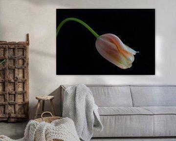 Nur eine Tulpe von Clazien Boot