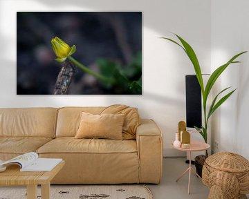 Tapfere gelbe Blume von Anita van Hengel