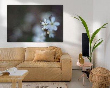 Blüte von Anita van Hengel