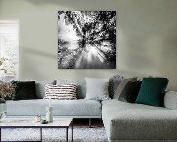 Himmlisch! schwarz-weiß 2 von de buurtfotograaf Leontien