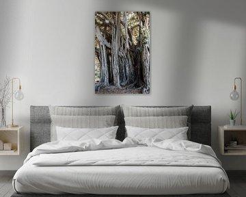 Les arbres à Palerme sur de buurtfotograaf Leontien