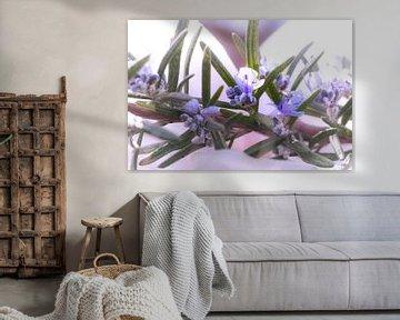 Rozemarijn in bloei van Tanja Riedel