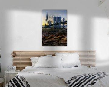 Le pont Erasmus à Rotterdam en automne