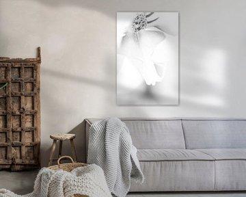 Schmetterlingsorchidee in Schwarz-Weiß von de buurtfotograaf Leontien