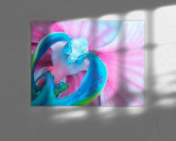 Blau mit rosa Schmetterlingsorchidee von de buurtfotograaf Leontien