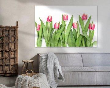 Rosa Tulpen in einer Reihe von Ratna Bosch