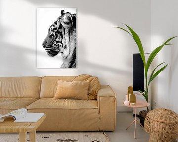 Profil einer Tigerin von Tazi Brown