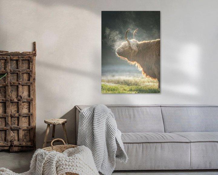 Sfeerimpressie: Schotse Hooglander, Texel van Edwin Kooren