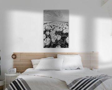 Blumenzwiebelfelder Goeree Overflakkee von Tilly Meijer