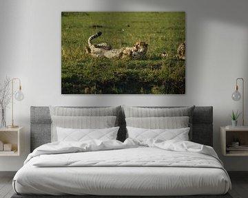 Gepard von Laurence Van Hoeck