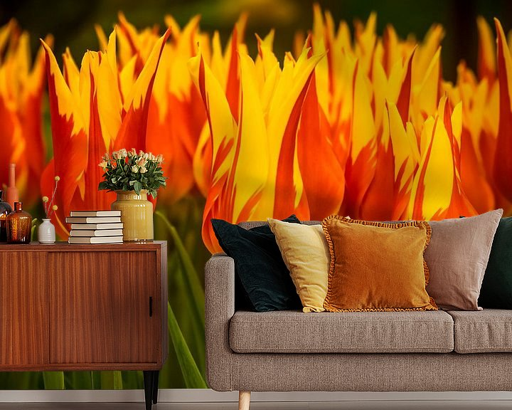 Beispiel fototapete: Feurige Tulpen von Martijn Tilroe