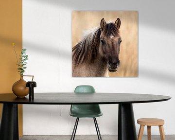 Konik-Pferd von Henk Zielstra