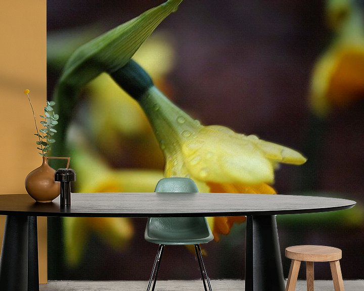 Sfeerimpressie behang: Narcissen na een regenbui. van Wieland Teixeira