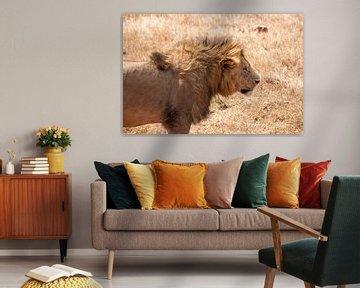 Leeuw in de zon in Tanzania van Mickéle Godderis