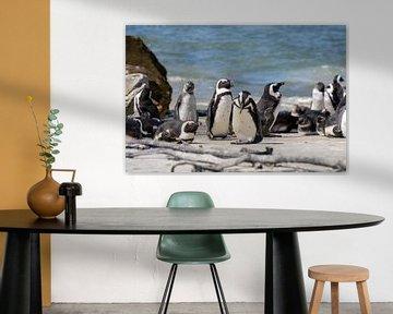 Pinguine in Südafrika von Reis Genie
