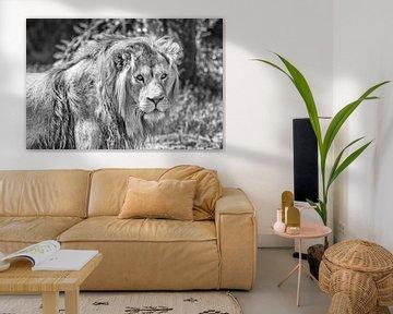 Löwen-Portrait von Hans Vos Fotografie