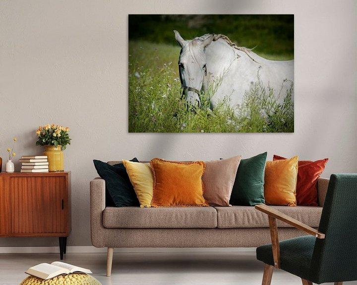 Sfeerimpressie: Andalusisch paard in de wei van Cristel Brouwer