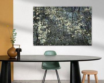 Frühlingsblüte von Marianna Pobedimova