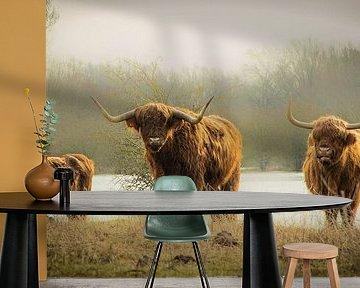 Drie stoere Schotse Hooglanders van Sonja van Poorten