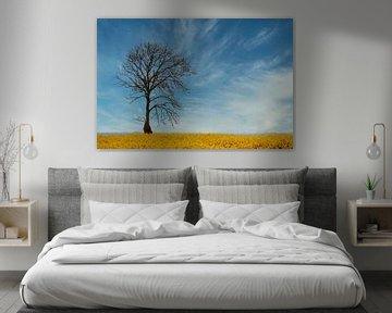 boom in koolzaadveld van Yvonne Blokland