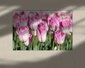 Tulpen von René Roelofsen