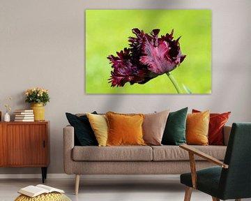 Tulpe in Grün von René Roelofsen