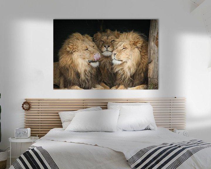 Beispiel: Drei Löwen in Nahaufnahme von Erik Wouters