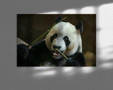 Portrait Riesiger Panda von Erik Wouters