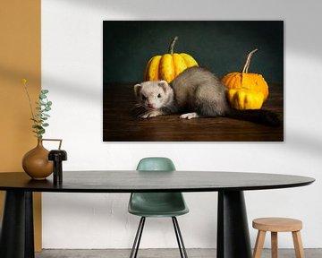 Stilleben eines Frettchens mit orangefarbenen Kürbissen vor grünem Hintergrund von Leoniek van der Vliet
