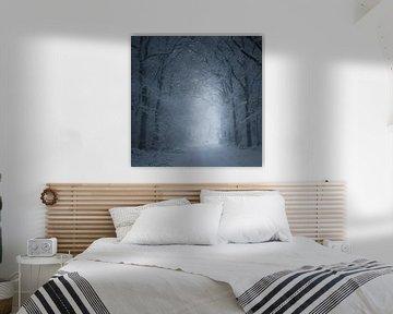 The Cold White Light von Daniel Laan