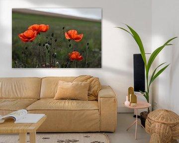Roter Mohn auf einem Feld oder einer Wiese im Sommer von Leoniek van der Vliet