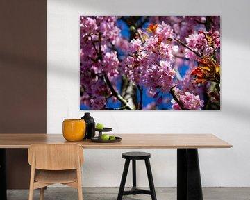 Rosenfrühlingsblüte an einem blühenden Baum im Frühling von Marco Leeggangers