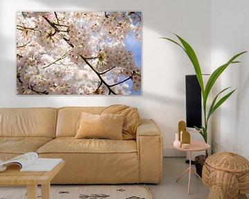 Zweig mit weißen Frühlingsblumen von Marco Leeggangers