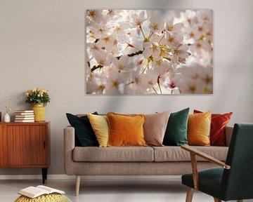 Weiße Blume in voller Blüte an einem Frühlingsbaum von Marco Leeggangers