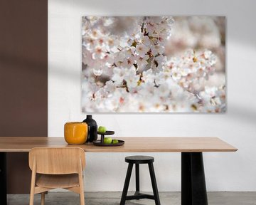 Weiße Blüten in einem Baum von Marco Leeggangers