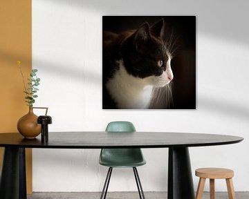 Phoebe die Katze von Henk Zielstra