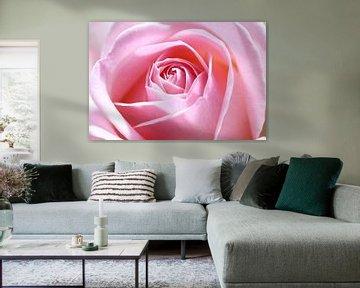 Pink beauty von LHJB Photography