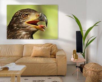 Greifvogel von Heiko Lehmann